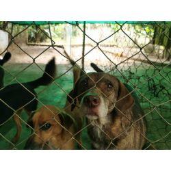 Bono de Donación en Efectivo $50.000 pesos